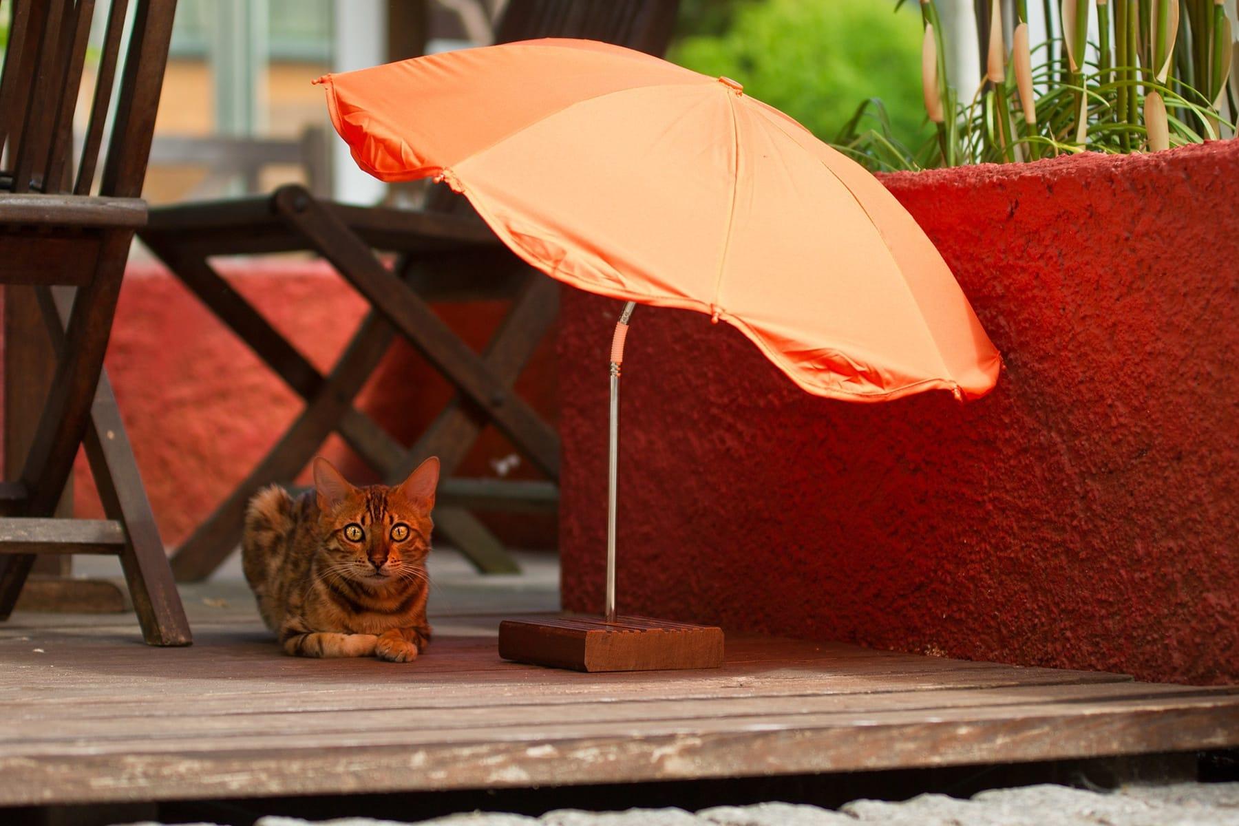 chat sous un parasol