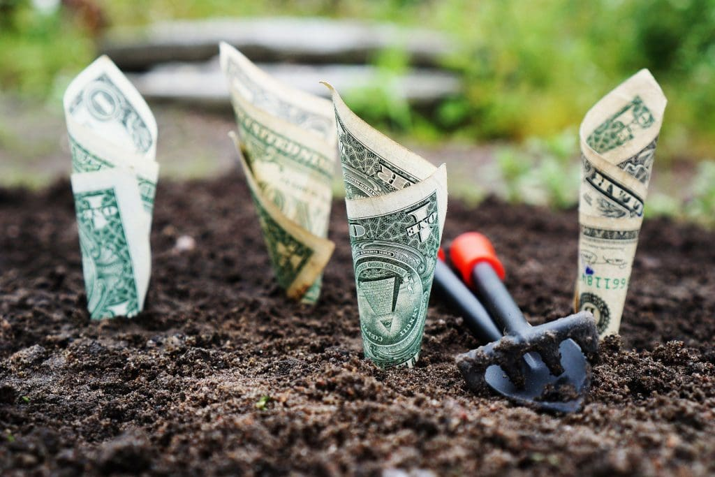 argent poussant dans un jardin